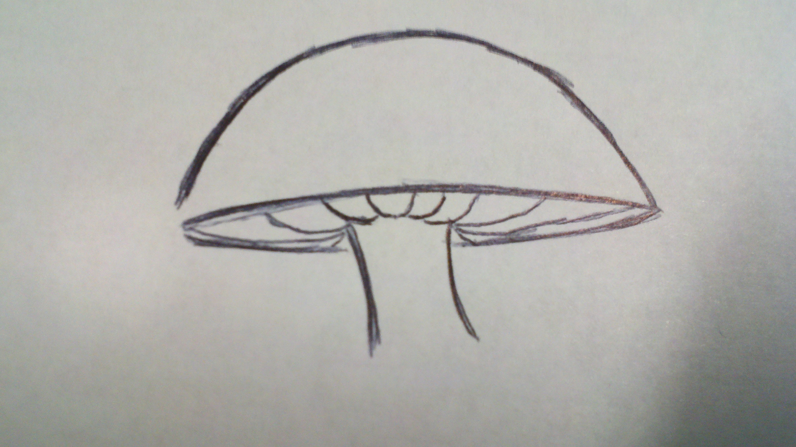 Drawing Lines With Pencil : How to draw a mushroom papercanyons
