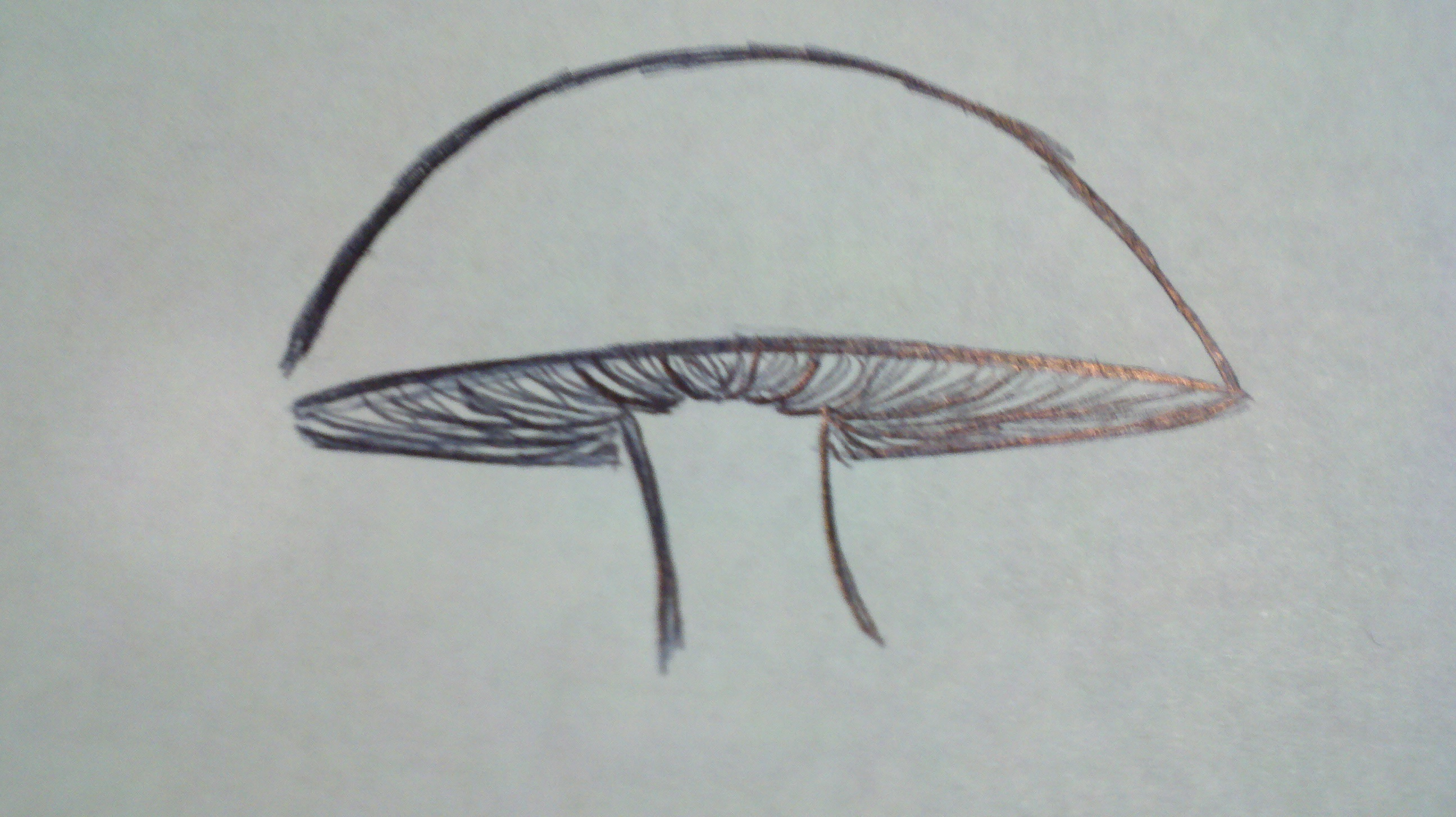 how to draw a mushroom papercanyons